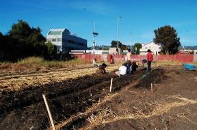 Farm occupation in Berkeley