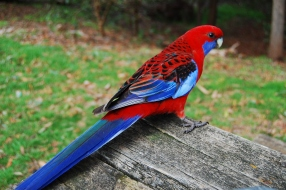 These pretty birds were everywhere!