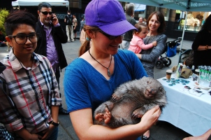Held a wombat! downtown Sydney