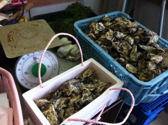 I put oysters into boxes and weighed them.