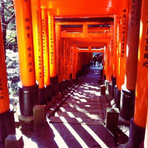 Light filters through the gates of Fushimi Inari
