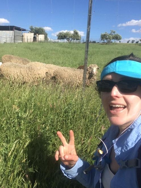 I found a sheep! Do I look crazy? Because I felt crazy. :)